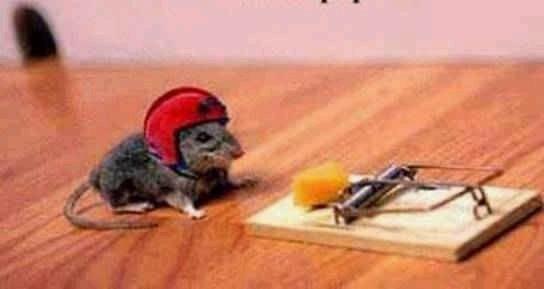 animales-graciosos-risa-raton
