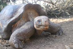 organismo-08-tortuga-gigante-galapagos