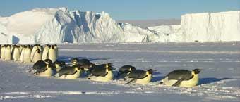 pinguinos-marcha-02