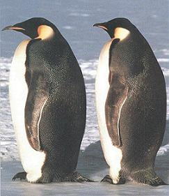 pinguinos-padres-01