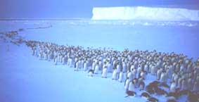 pinguinos-procesion-03