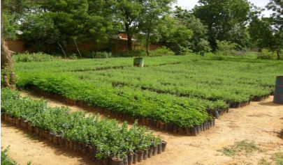 senegal-arboles-tree-nation-2