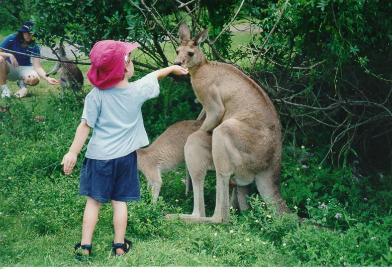 animales-graciosos-canguro