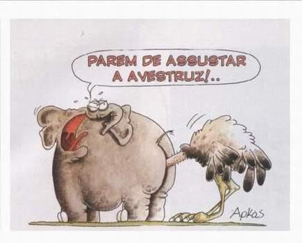 animales-graciosos-elefante-avestruz