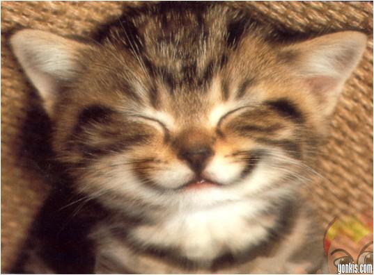 animales-graciosos-gatito