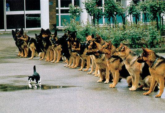 animales-graciosos-perros-gato