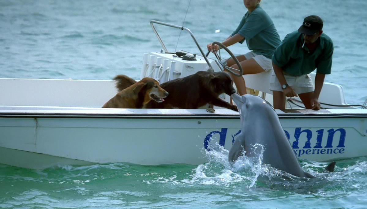 dog-perro-delfin-dolphin