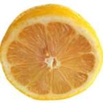 ¿Es verdad que todas las naranjas umbilicadas provienen del mismo árbol?