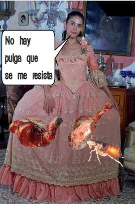 versalles-pulgas-carne