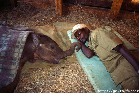 amor-animal-elefante-hombre