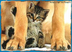 amor-animal-gato-perro