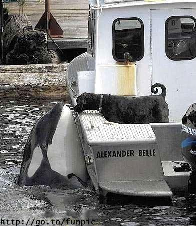 amor-animal-orca-perro