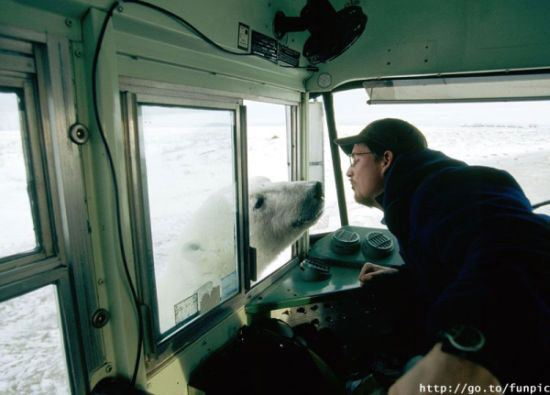 amor-animal-oso-hombre