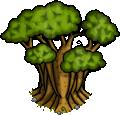 baobab-arbol-8
