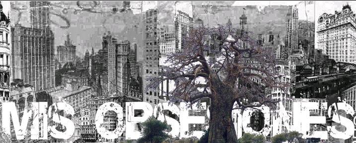 baobab-obsesiones