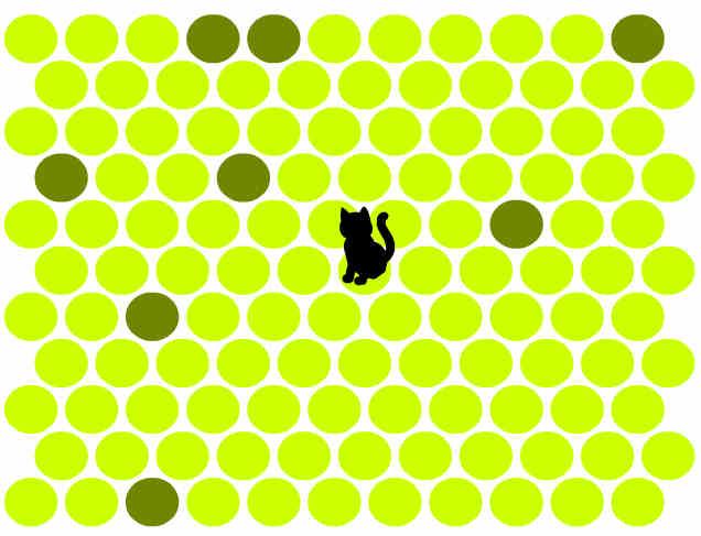 juego-gato-negro