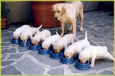 muchos-perritos-perros-18