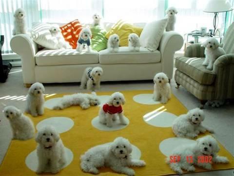 muchos-perritos-perros-19