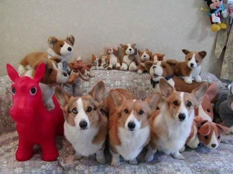 muchos-perritos-perros-20