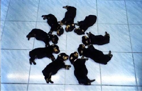muchos-perritos-perros-21