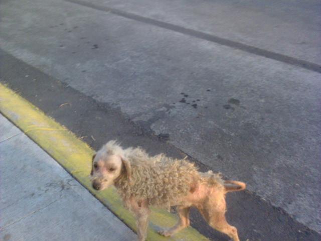 perro abandonado calle