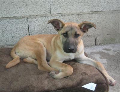 perro_abandonado-dog