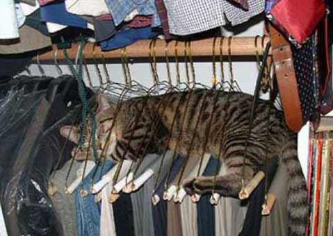 sorprendente gato