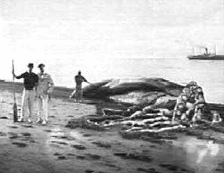 calamar-colosal-Mesonychoteuthis-hamiltoni