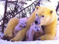oso-polar-bear-02