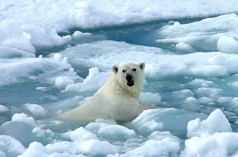 oso-polar-bear-05