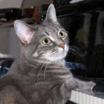 Nora, la gata pianista
