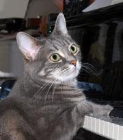 Nora Piano gato gata