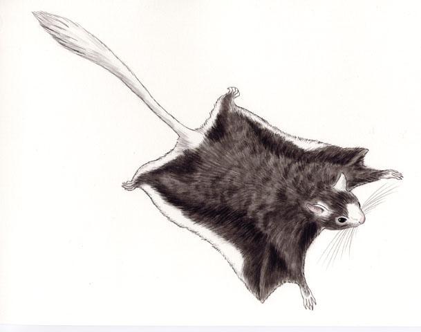 alas-mapache