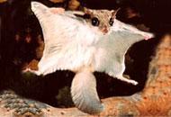 alas-sraye_lemur_astro