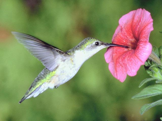 colibri libando libar suspension