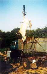 ovejas transporte peta 10