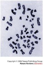 chimpance genes cromosomas