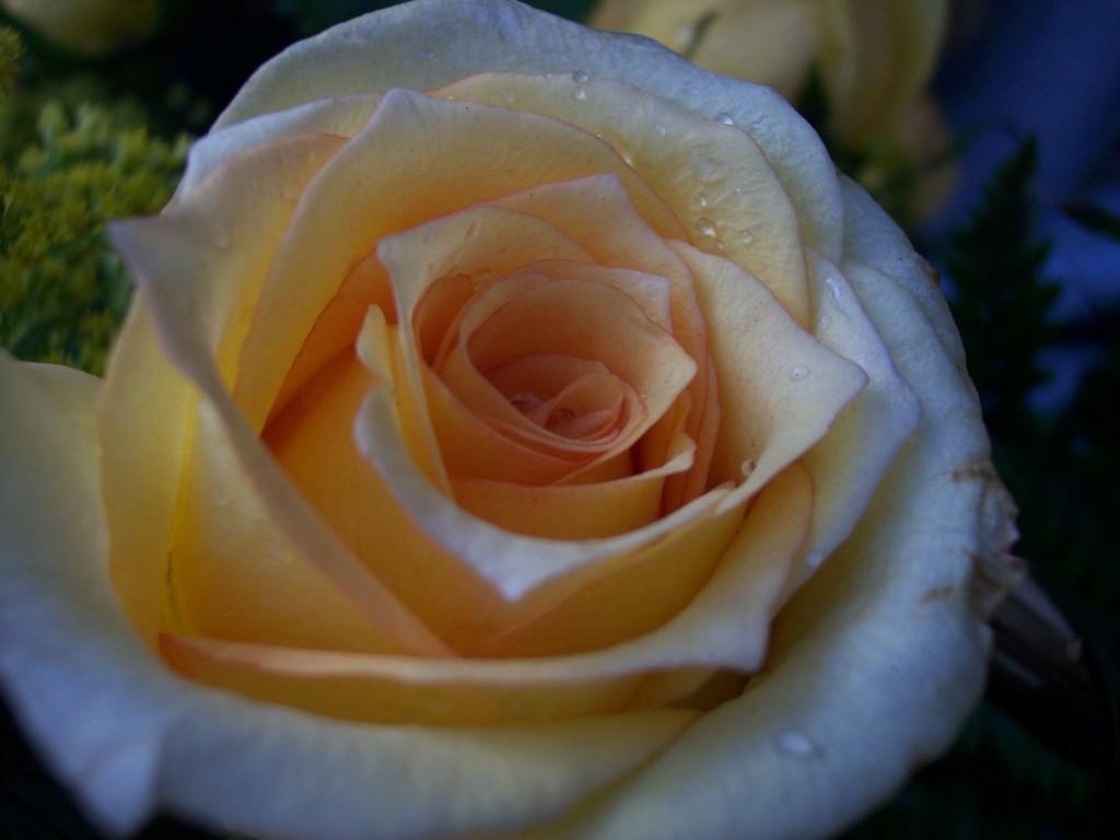 imagenes-fotos-flores-01