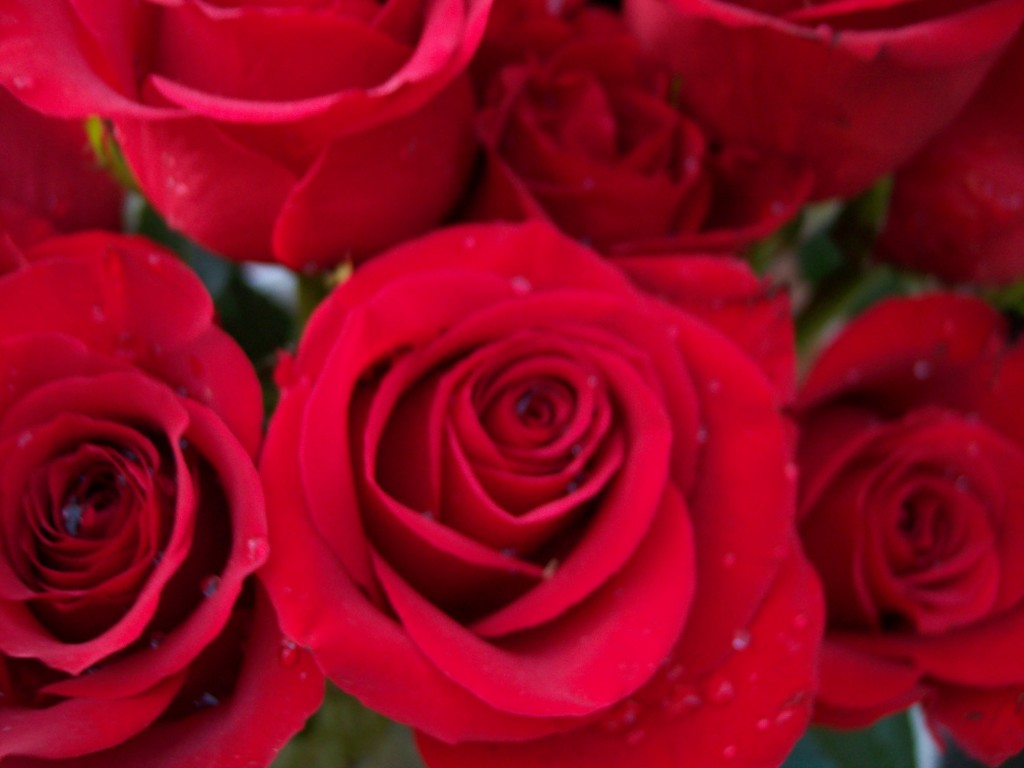 imagenes-fotos-flores-02
