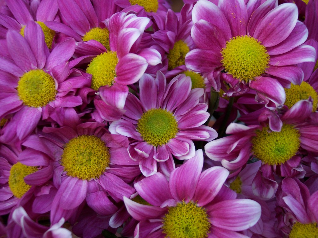 imagenes-fotos-flores-03