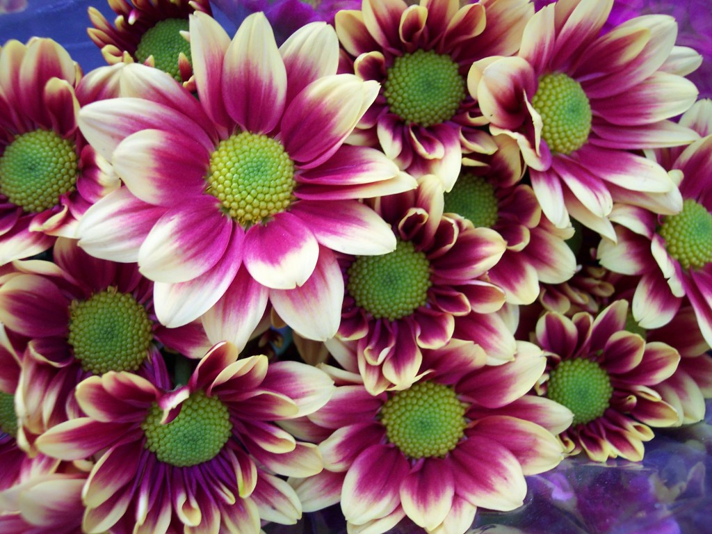 imagenes-fotos-flores-04
