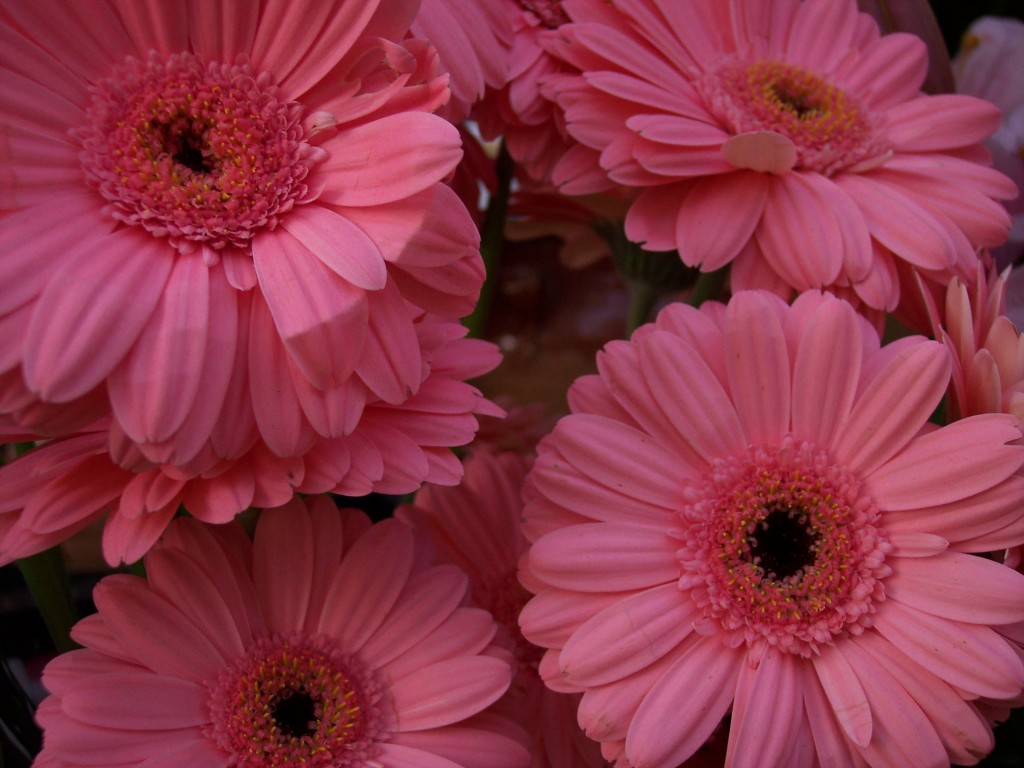 imagenes-fotos-flores-05