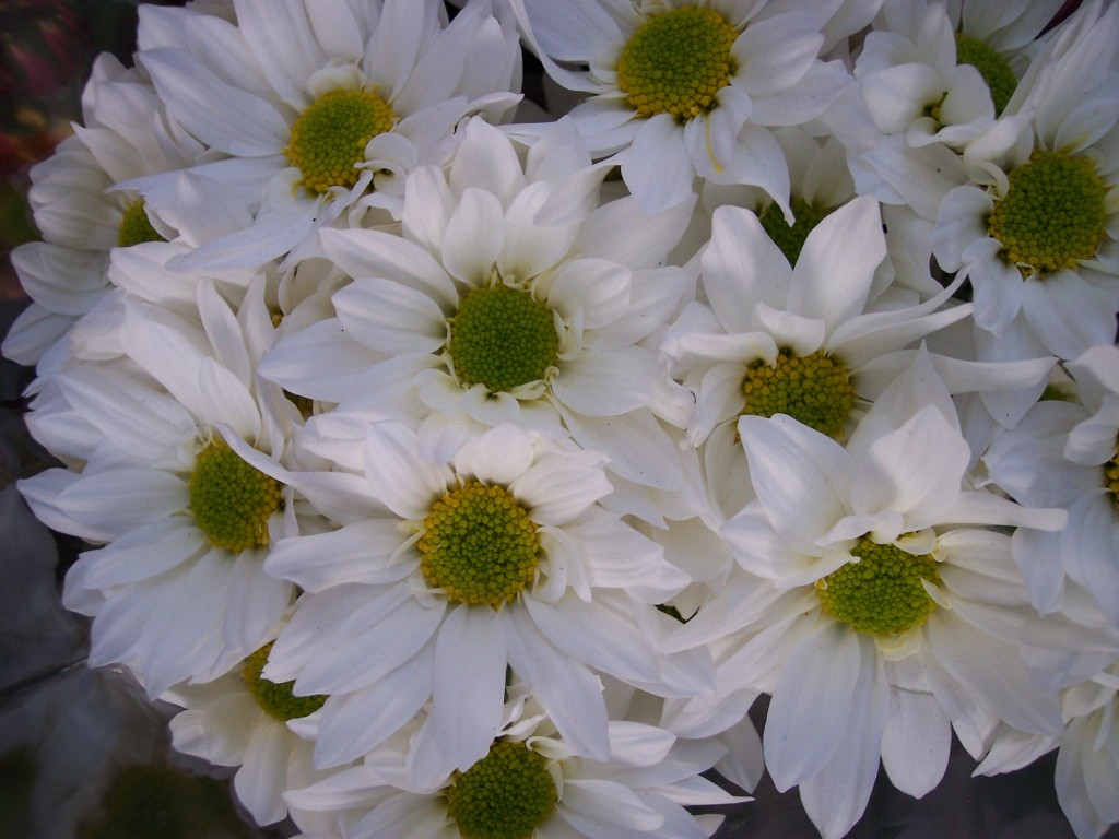 imagenes-fotos-flores-06