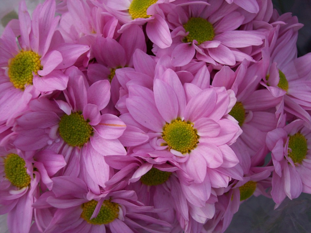 imagenes-fotos-flores-08