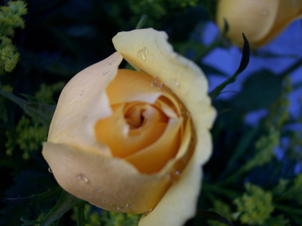 imagenes-fotos-flores-11