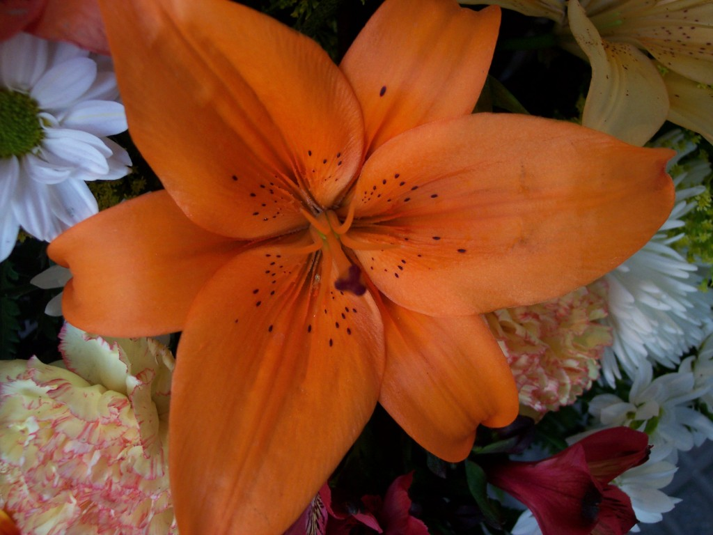 imagenes-fotos-flores-12
