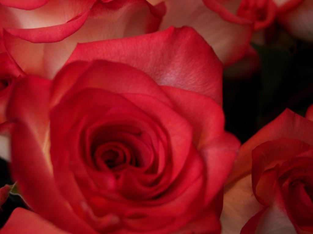 imagenes-fotos-flores-13