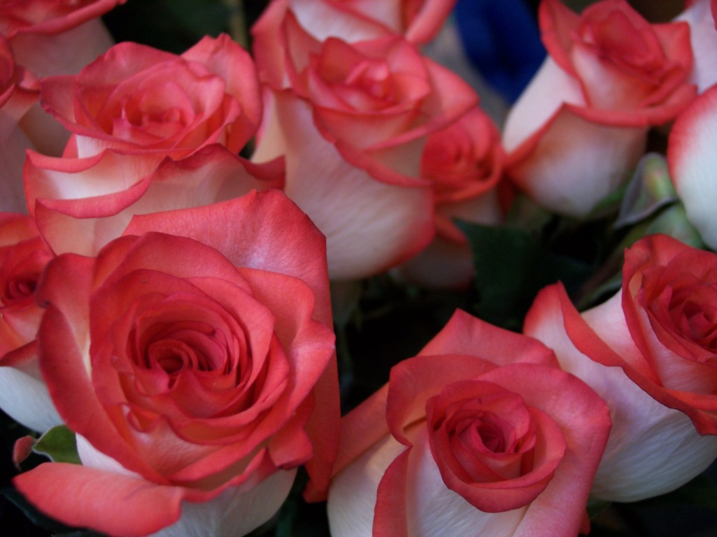 imagenes-fotos-flores-14