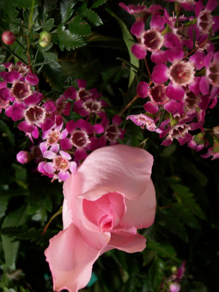 imagenes-fotos-flores-15