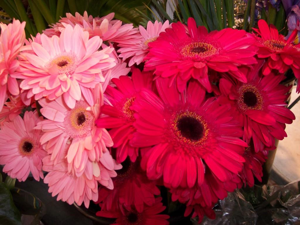 imagenes-fotos-flores-16